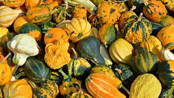 Autumn Harvest Cooking Class October 13
