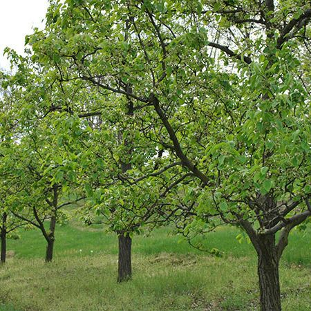 Fruit Tree Pruning Workshop September 10